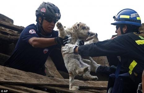 Cani Terremoto Giappone