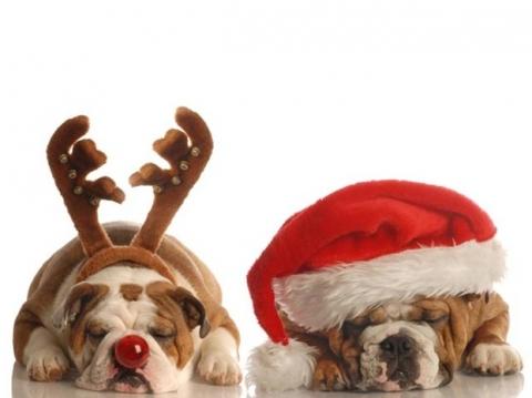 regalo natale 2013 cane