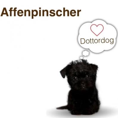 affenpinscher Dottordog