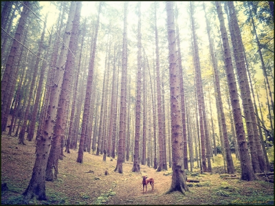dog-lost-forest-trees-nature-Favim.com-542068