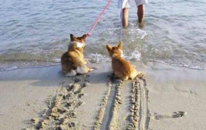 Cani bagno in mare