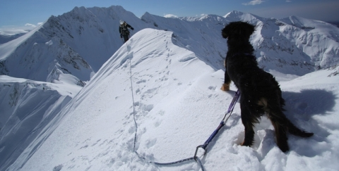 panorama-tina-the-climbing-dog