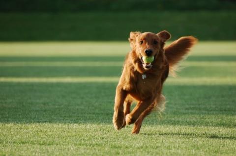 cane corre al parco