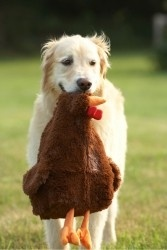 cane giochi