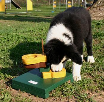 cane giochi2