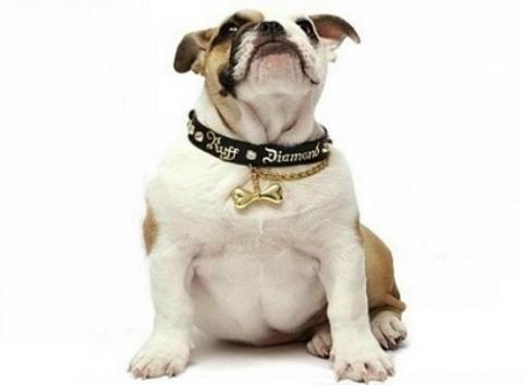 cane medaglietta