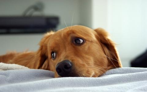 cani: stress da rientro