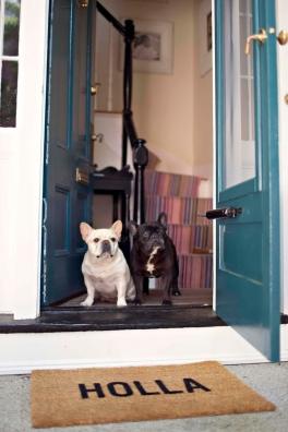 cane casa1
