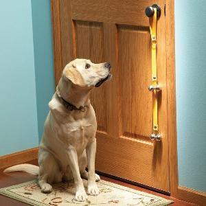 cane fuori porta