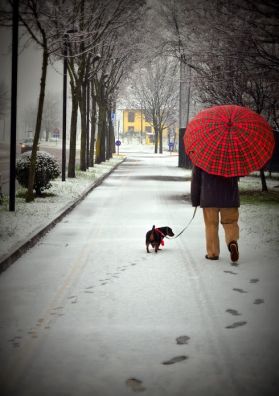 cane-passeggio