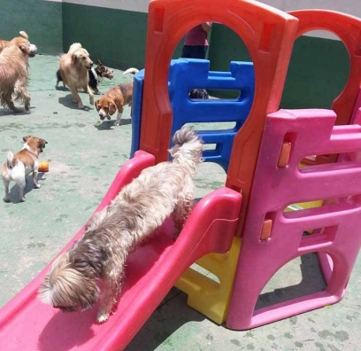 Asilo-Nido-per-cani
