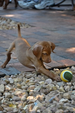 cane giochi6
