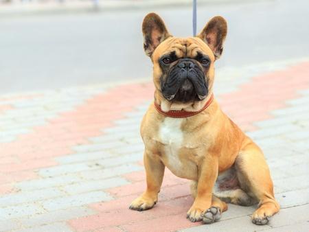 03_19_bulldog02