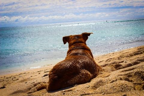 06_29_spiaggia02