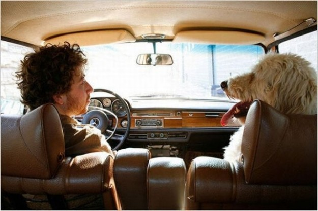 cane-e-padrone-ricci-in-macchina