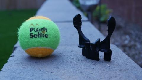 pooch-selfie-3