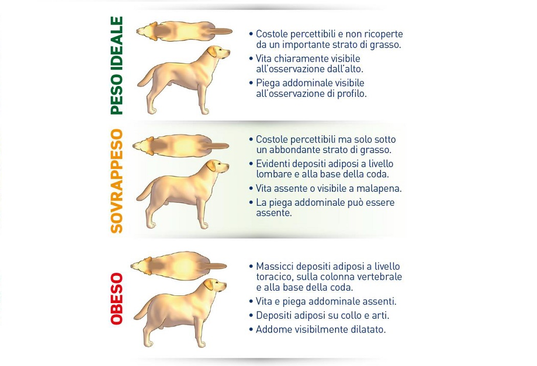 tabella-peso-cane
