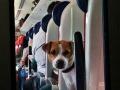 cani-in-treno