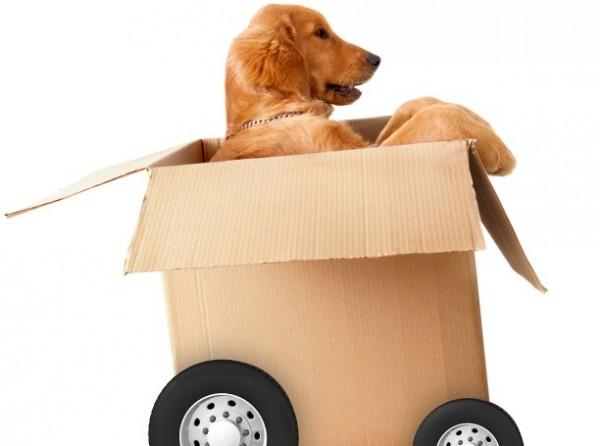 cane-in-scatola-e1452749158911