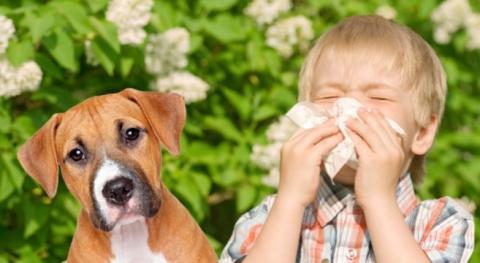 allergia-cane