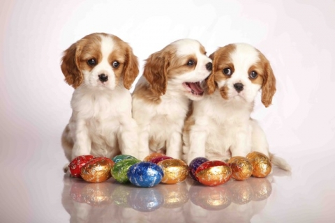 easter-624x416