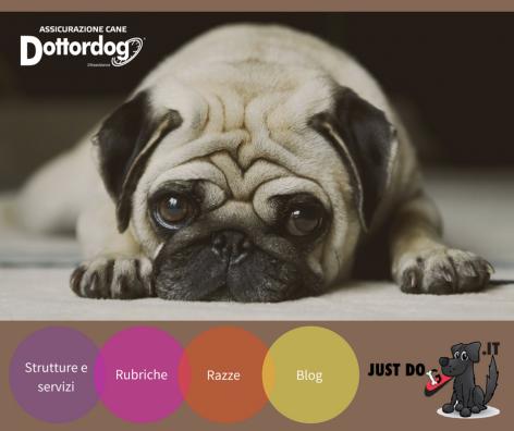 Tutto quello che cerchi per il tuo cane in un solo click!