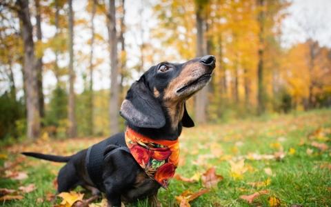 cane-gatto-autunno-1